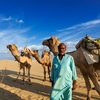 Animals With Indian Cameleer - Rajasthan