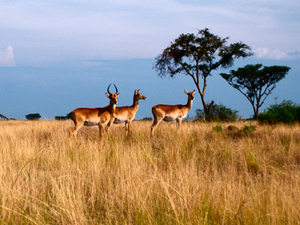 Wildlife Tour to Queen Elizabeth National Park Photos