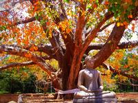 Cultural Tour - Sri Lanka