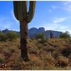 Apache Junction - Arizona