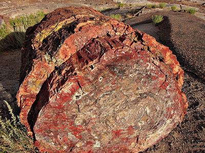 A Petrified Log In The Petrified Forest
