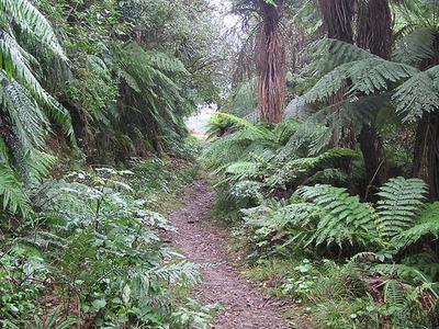 Apiti Hut To Saddle Mangaawai Hut Trail - Te Urewera National Park - New Zealand