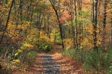 Appalachian Trail: Totts Gap To Mount Minsi PA