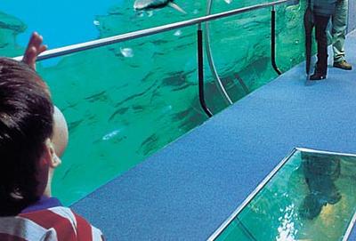 Aquarium - Sea Palace