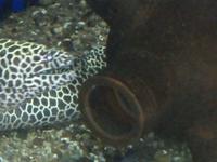 Matsyadarshini Aquarium