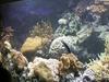 National Aquarium, Baltimore's Marine Mammal Pavilion