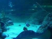 Aquarium of Western Australia (AQWA)