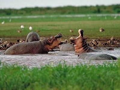 Arch Safaris & Tours - Kampala