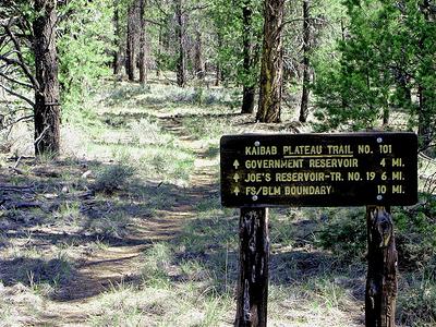 Arizona Trail Near Grand Canyon - USA