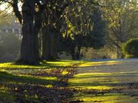 Armley Parque