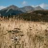 @ Arthur's Pass National Park - South Island NZ