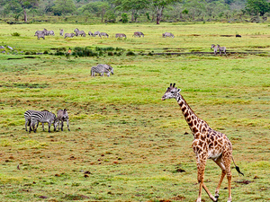 Student Special Package-Wildlife And Cultural Tours