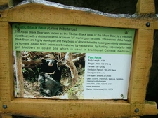 Asiatic Black Bear Facts
