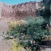 Asirgarh Fort