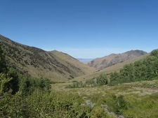 Aspen In Big Creek
