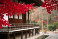 Autumn Foliage On The Grounds Of Tenryu-ji