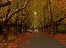 Autumn In Suburban Canterbury