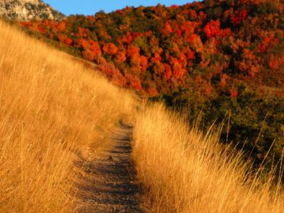 Autumn Mountain Trail