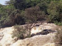 Awash Park Safari Trip