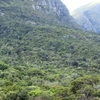 Newlands Bosque