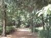 Walking Trail In Bagh E Jinnah