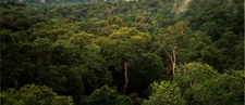 Amazon Rainforest Near Manaus, Brazil