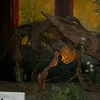 Anchiceratops Dino Mcanb