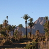 An Oasis In The Ahaggar Mountains