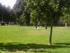An Open Area In  Glebe  Park