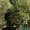 A Portion Of Silverado's Main Road