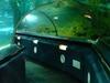 Tunnels At Kelly Tarlton's Sea Life Aquarium