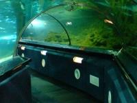 Underwater World Kelly Tarlton