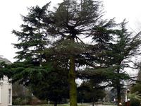 Heath Kings Park