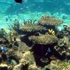 Australian Coral Sealife