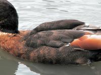 Yalgorup Área Importante para las Aves