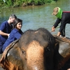 Baanchang Elephant Park.