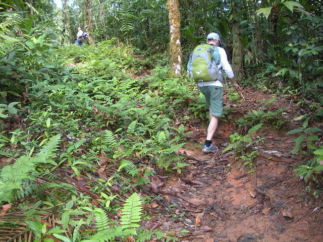 Corcovado National Park-day Tour At Sirena Station Photos