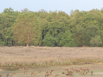 Badalkhol Wildlife Sanctuary
