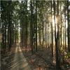 Bagdara Santuario de Vida Silvestre