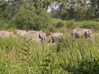 Baghmara Reserve Forest