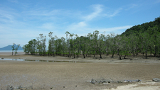 Bako National Park Landscape