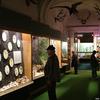 Bakony Natural History Museum, Zirc