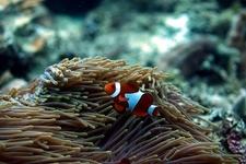 Balicasag Diver's Heaven - Panglao