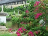 A View Of The Bangkok Protestant Cemetery