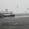 Bang Pu Seaside