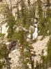 Bannock Falls - Wyoming