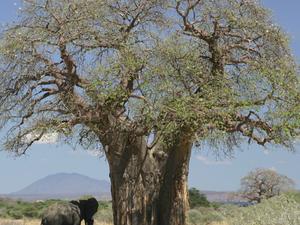 2 Day Tanzania Camping Safari