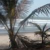 Beach At Fajara
