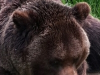 Bears Sanctuary, Rasnov Fortress And Bran Castle Day Tour From Brasov