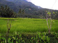 Camiguin Island
